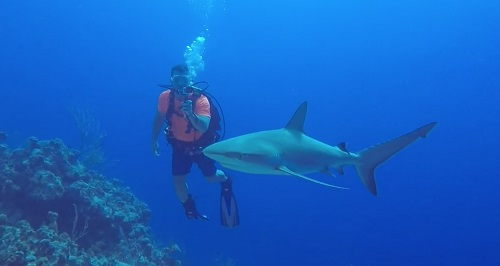 Bahamas Diver and Shark Copyright Greg Yuschak