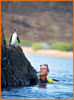 Galapagos Snorkler with Penguin